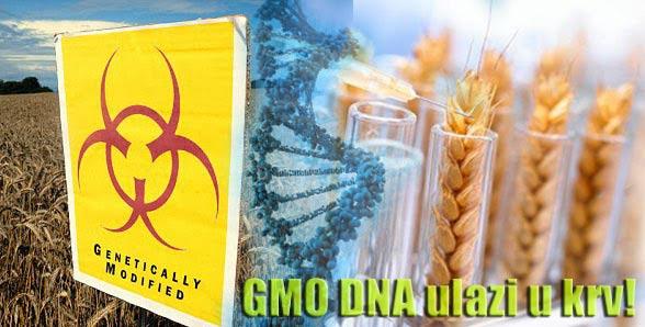 GMO-hrana