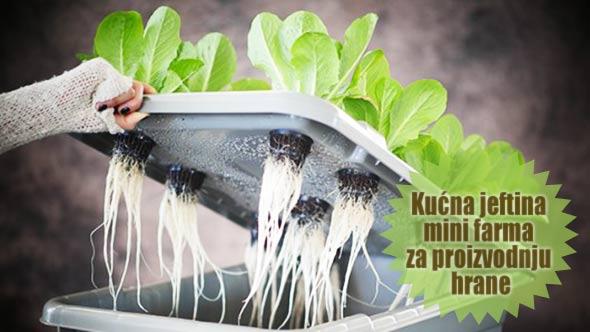 minifarma-hrana-uzgajanje