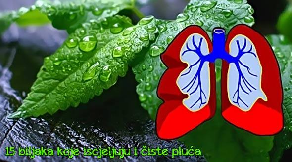 biljke-pluća