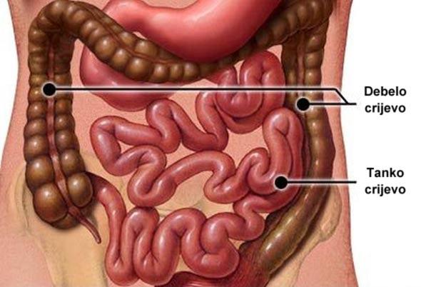 crijeva-toksini