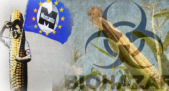 monsanto-gmo-europska-unija