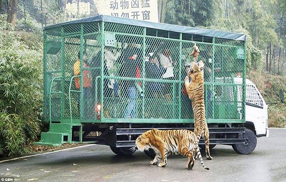 kavez-zoo-zivotinje