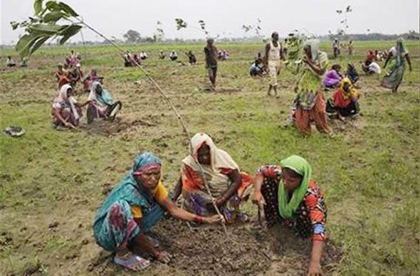 indija-drvo-sadnja