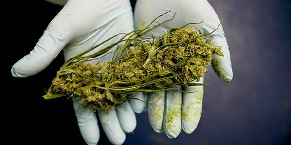 marihuana-vlada