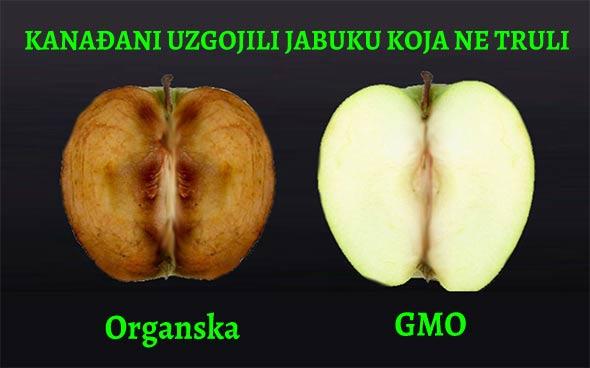 jabuka-gmo