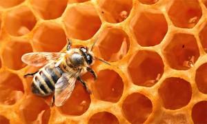 ISTRAŽIVANJE: Smrtonosni Pesticidi Pronađeni u 75 posto Meda u Svijetu