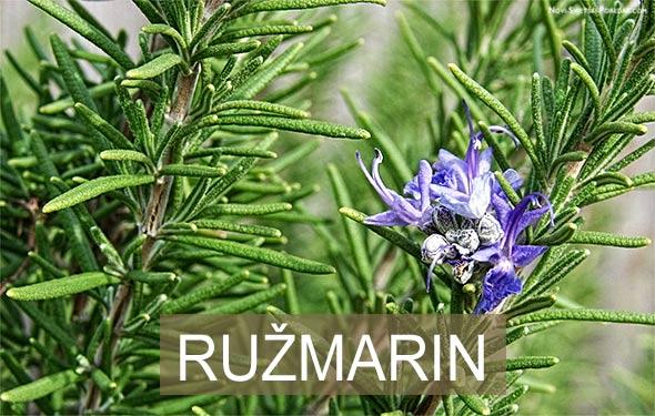 ruzmarin-memorija