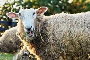 LOŠA SITUACIJA U ZEMLJI? NE BRINITE, BIT ĆE JOŠ GORE: Istraživanje pokazalo da su većina ljudi ovce i da se ne žele buniti protiv autoriteta